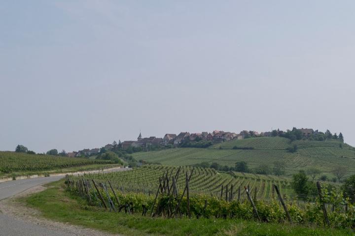 Resize Alsace 224.jpg